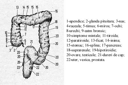 colonul