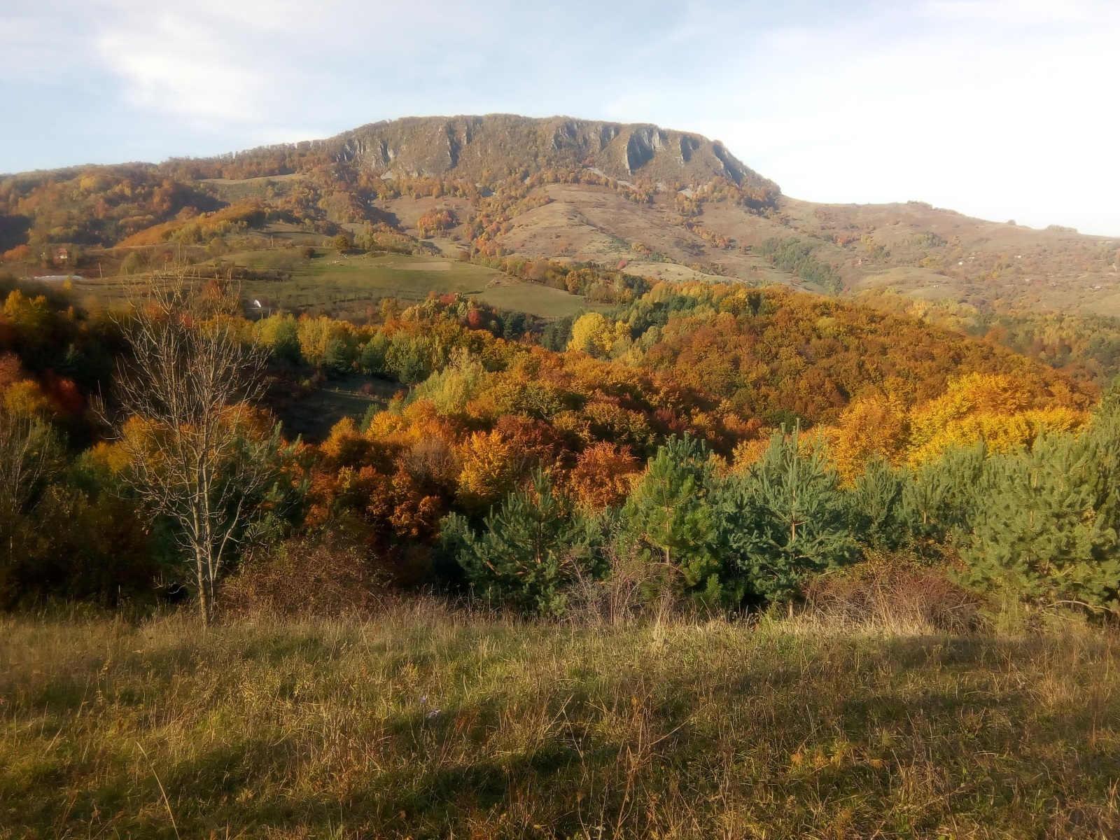 meditatie-dumbrava-stramba-autumn